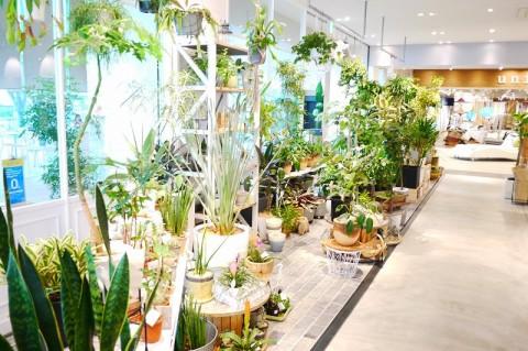 注目の植物紹介